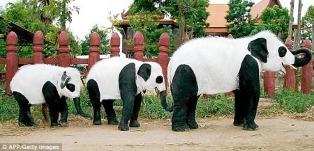 elephant-panda1