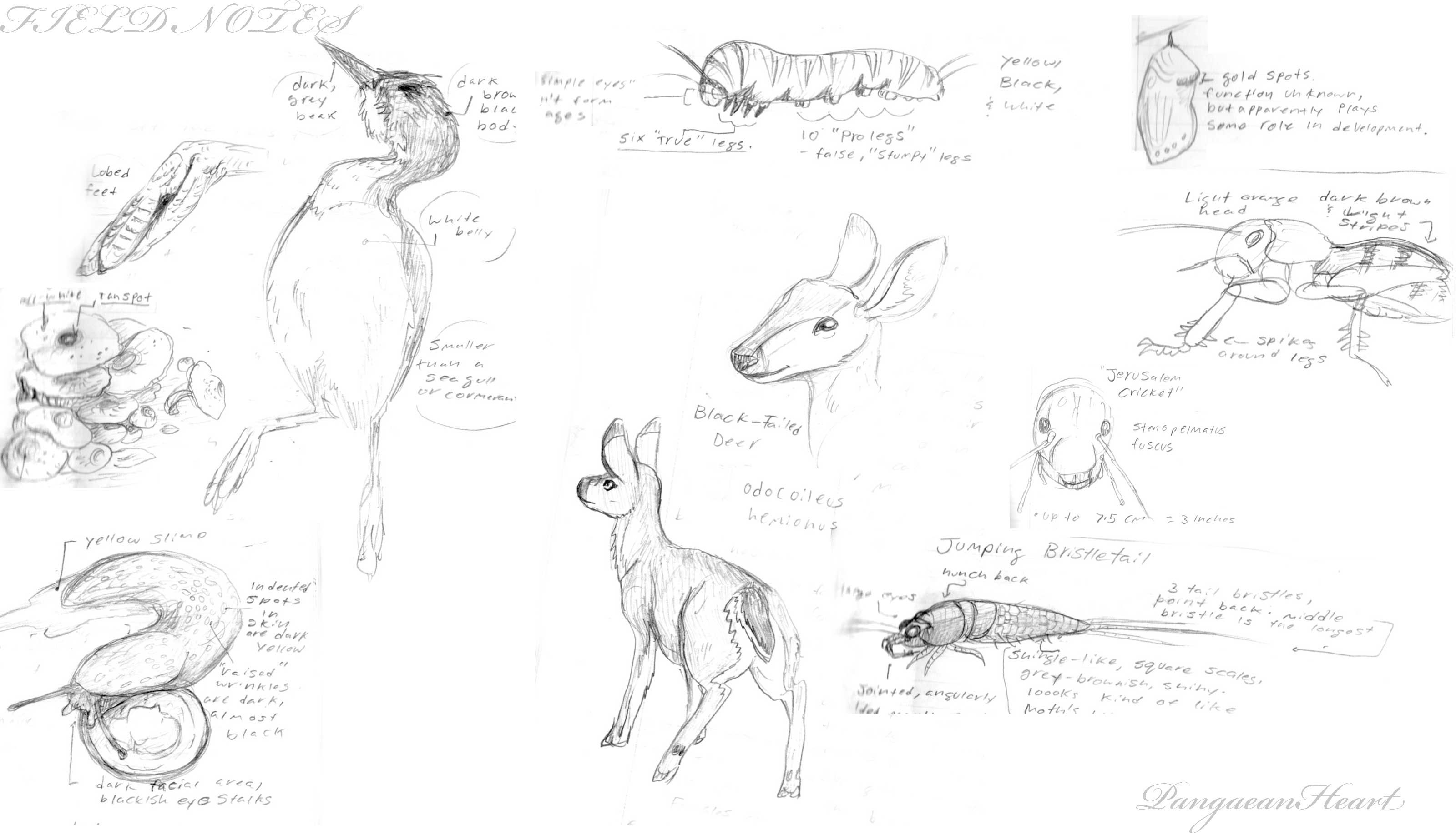 Field Note Sketches