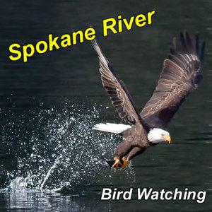 bird-watching-spokane