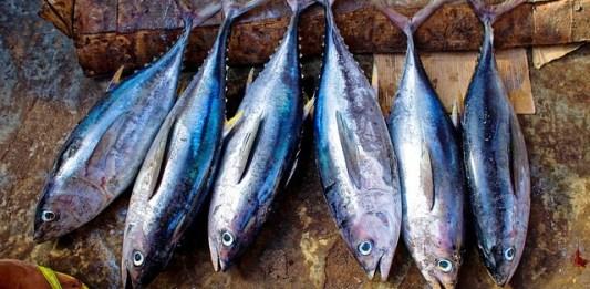 merkuri-pada-ikan-tuna