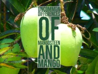Uncommon Differences Of Mangosteen And Mango