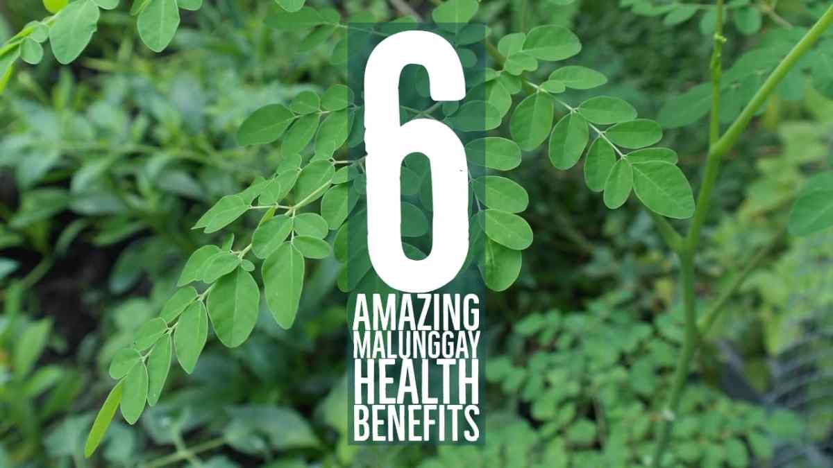 6 Amazing Malunggay Health Benefits