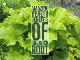 amazing health benefits of burdock root