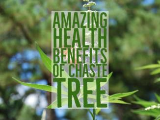 Amazing Health Benefits Of Chaste Tree