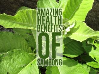 Amazing Health Benefits Of Sambong