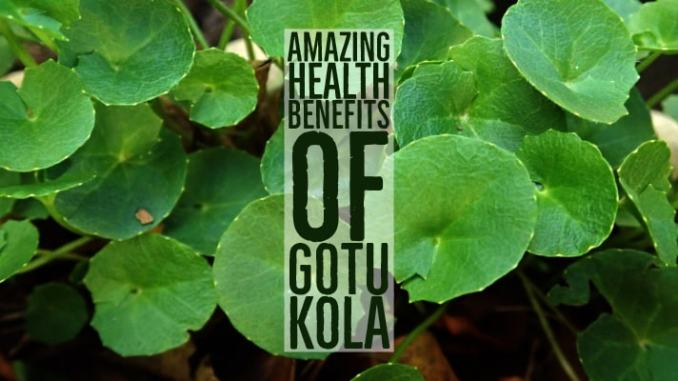Amazing Health Benefits Gotu Kola
