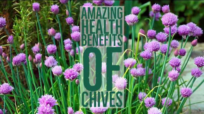 Amazing Health Benefits Chives