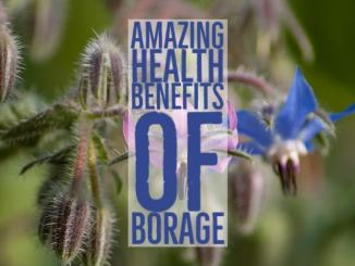Amazing Health Benefits Borage