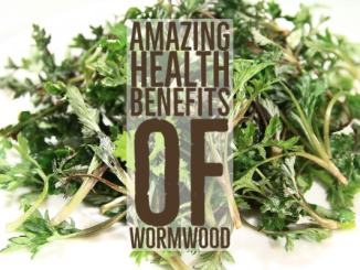 Amazing Health Benefits Wormwood