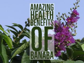 Amazing Health Benefits Banaba