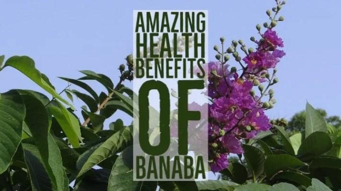 Amazing Health Benefits Banaba