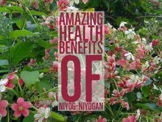 Amazing Health Benefits Niyog-niyogan