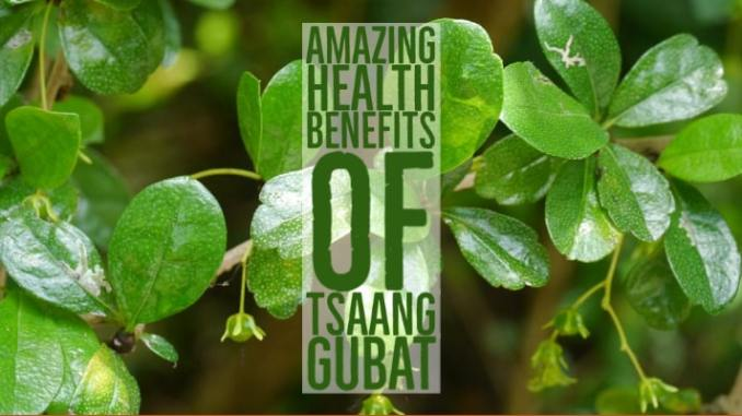 Amazing Health Benefits Tsaang Gubat