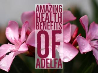 Amazing Health Benefits Adelfa