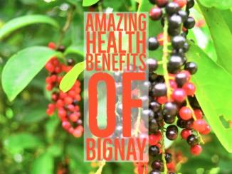 Amazing Health Benefits Bignay