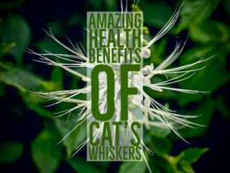 Amazing Health Benefits Cats Whiskers