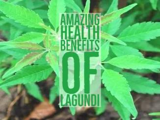 Amazing Health Benefits Lagundi