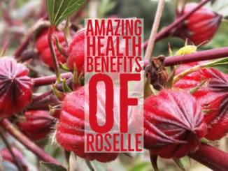 Amazing Health Benefits Roselle
