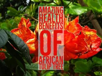 Amazing Health Benefits African Tulip Tree