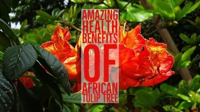 Amazing Health Benefits African Tulip Tree