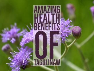 Amazing Health Benefits Tagulinaw