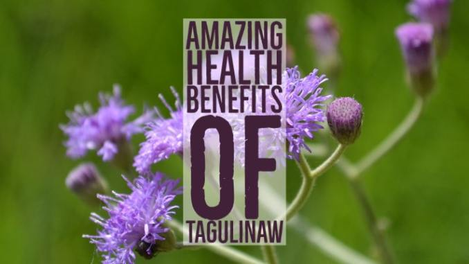 Amazing Health Benefits Tagulinaw