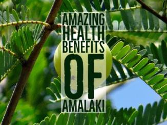 Amazing Health Benefits Amalaki