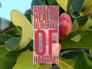 Amazing Health Benefits Haritaki