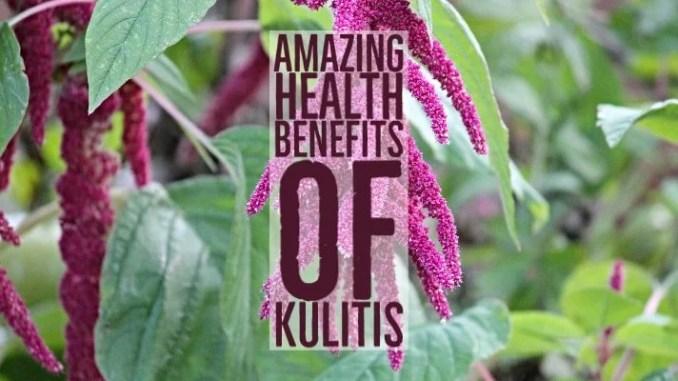 Amazing Health Benefits Kulitis