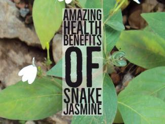 Amazing Health Benefits Snake Jasmine