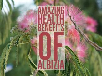 Amazing Health Benefits Albizia