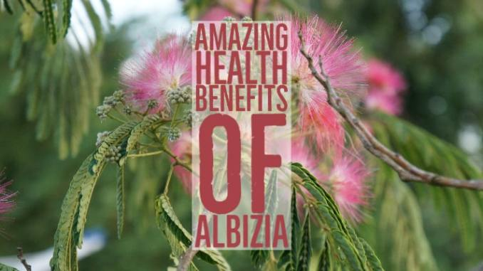 Amazing Health Benefits Albizia