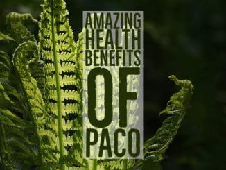 Amazing Health Benefits Paco