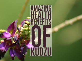 Amazing Health Benefits Kudzu