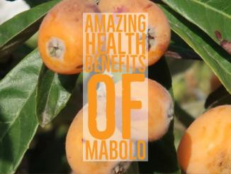 Amazing Health Benefits Mabolo