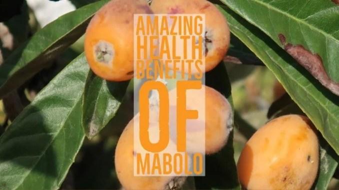 Amazing Health Benefits Mabolo
