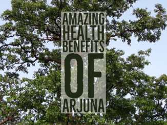 Amazing Health Benefits Arjuna