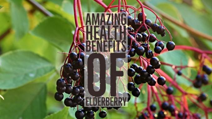 Amazing Health Benefits Elderberry