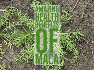 Amazing Health Benefits Maca