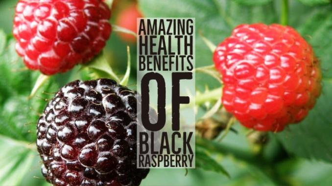 Amazing Health Benefits Black Raspberry