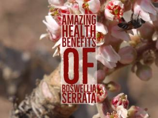 Amazing Health Benefits Boswellia Serrata
