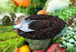 pupuk organik