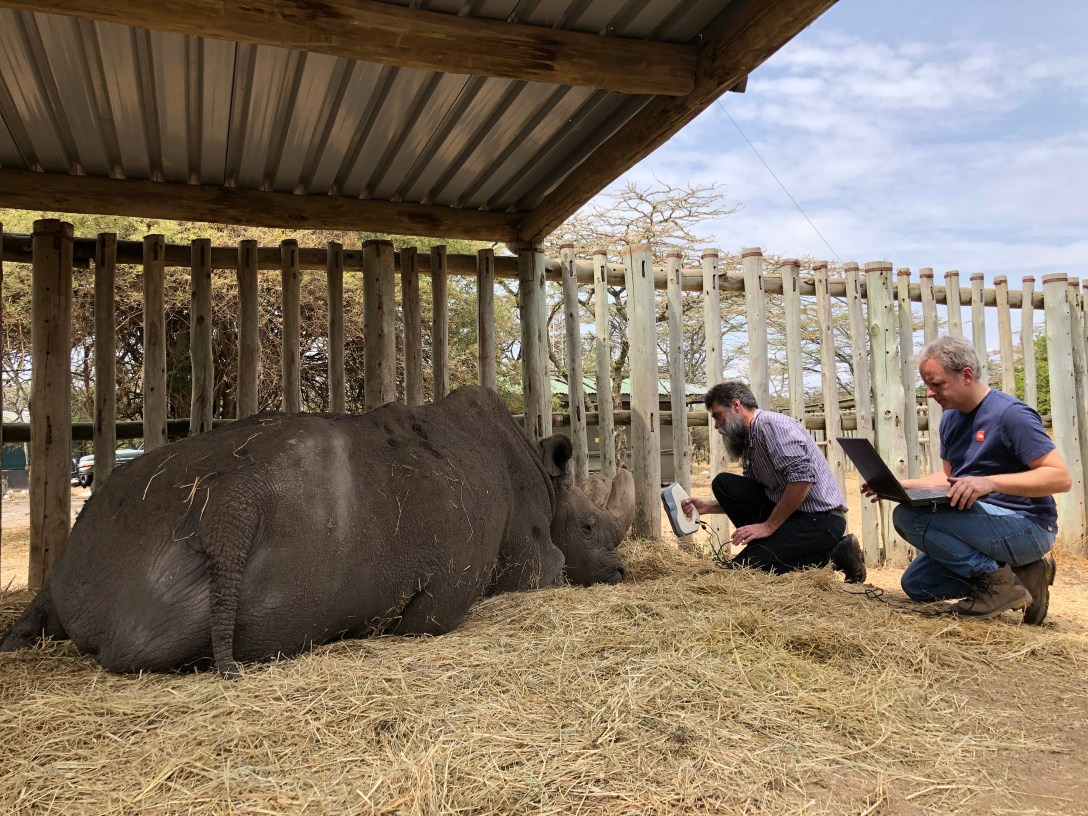 'white light' '3d scan' of 'Sudan' the last northern white rhino