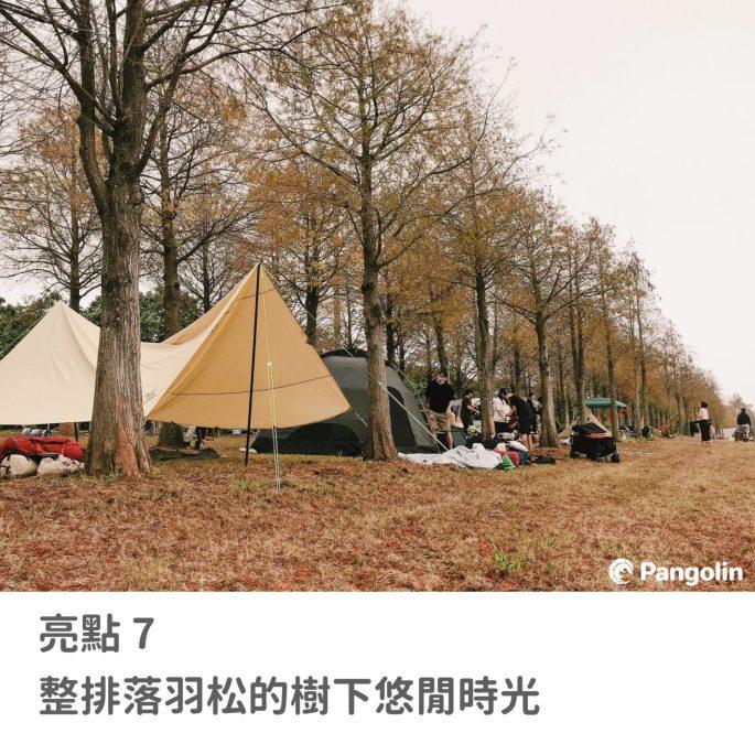 2020 camp de amigo 落羽松