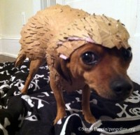 Pangolin-Loving Pups: How to Make a Pangolin Dog Costume ...