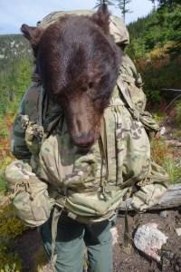 Idaho black bear taking a ride in a Kifaru EMR 2