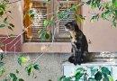 Пессимист и оптимист кошачьего племени
