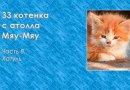 33 котенка с атолла Мяу-Мяу. Часть 8. Хатуль