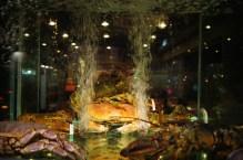 Akwarium w witrynie restauracji