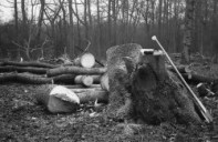 Shadwell Wood